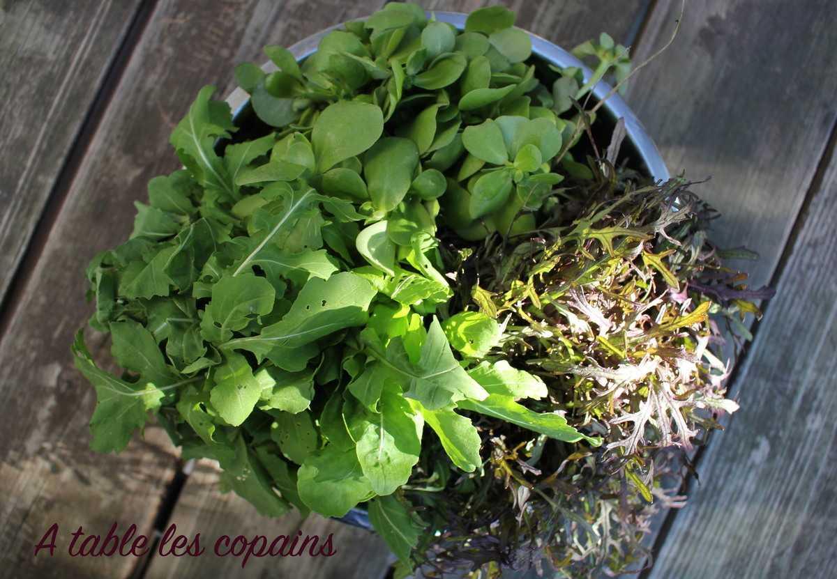 Salade d'herbes aux noix, féta et grenade